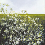 """Horizon, cow parsley"", Mixed Media, 11 x 10 inches - Painting by Rory Browne"
