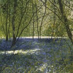 """Light Patches, bluebell glade"" Mixed media.10.5 x 9""- a painting by Rory Browne"